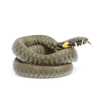 kap 9 oppg 6 slange.jpg