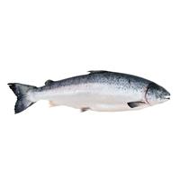 kap1_oppg2_fisk.JPG