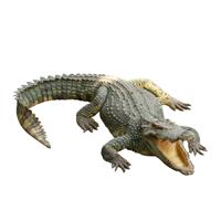 kap3_oppg8_krokodille.jpg