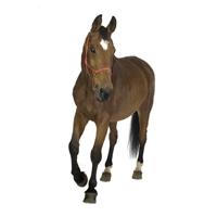 kap1_oppg6_hest.jpg