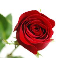 kap1_oppg8_rose.jpg
