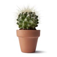 kap3_oppg6_kaktus.jpg