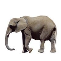 kap1_oppg6_elefant.jpg
