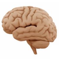 kap 10 oppg 6_hjerne.jpg