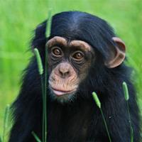 kap4_oppg8_ape.jpg